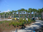 Naples Botanical Garden Florida Garden Wildflower Meadow under construction Summer 2010