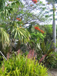 Naples Beach Hotel - Tropical Flowering Plants