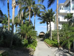 Naples Beach Hotel - Walk with Coconuts