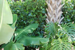 Palm Cottage - Tropical Plantings