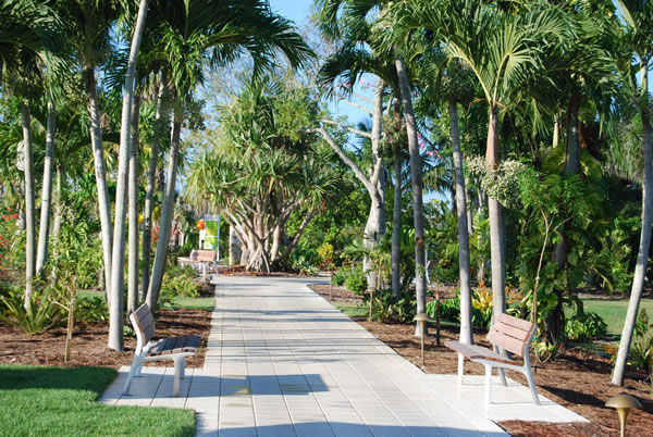 ... Naples Botanical Garden   Palm Walk ...
